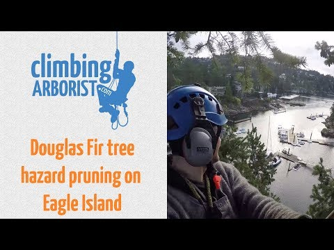Hazard pruning a Douglas Fir on Eagle Island