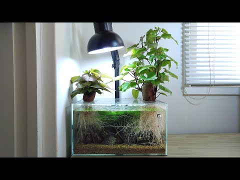 Ep.3 Sweet Potato Betta Tank (Meet Kartoffel) - No Filter, No CO2, NO Ferts 4.5 Gallon Nano Tank