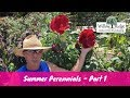 Summer Blooming Perennials - Part 1