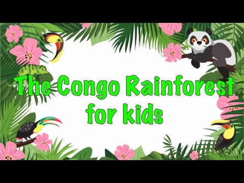 Facts about the Congo Rainforest For kids
