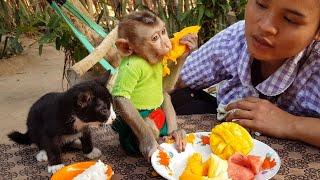 Obedient Monkey Koko Joining Eating With Little Kitten   Cute Koko & Kitten