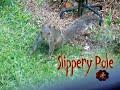 SLIPPERY POLE