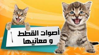 أهم 10 أصوات عند القطط ومعانيها
