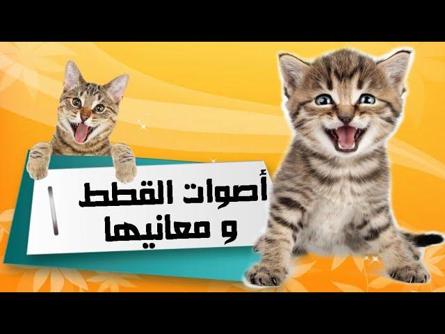 أهم 10 أصوات عند القطط ومعانيها Youtube