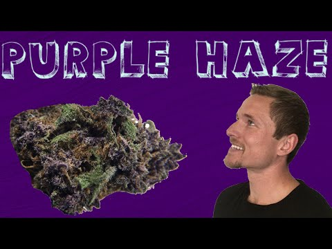 Purple Haze Denver Kratom Bulk
