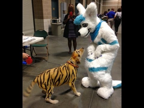 Fursuit Outing At St Louis Pet Expo Youtube