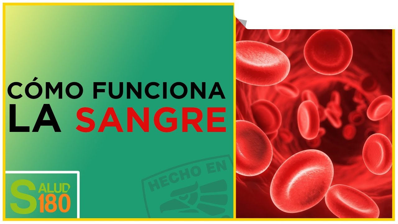Dieta para el tipo de sangre o positivo