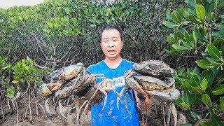 红树林里的大螃蟹没人抓,玉平连抓几只超大的,第一次螃蟹抓爆桶