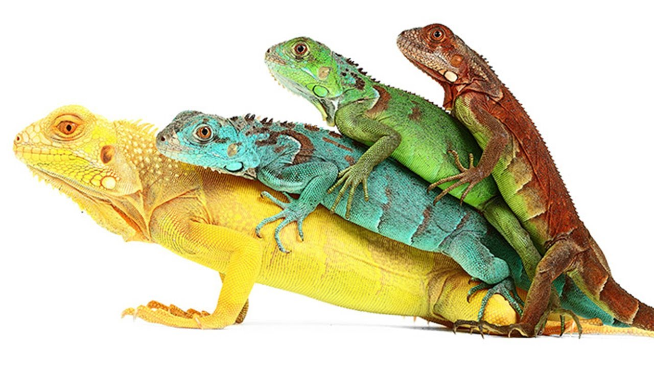Imagini pentru reptile