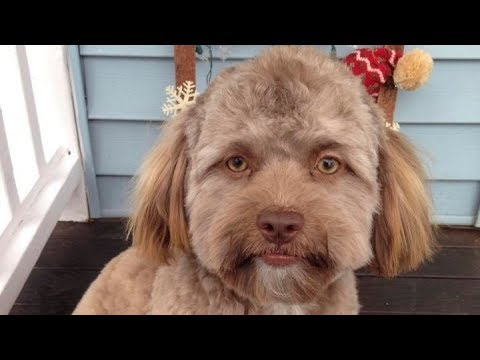 The Internet Is Going Crazy Over This Dog With Human-Like Face.