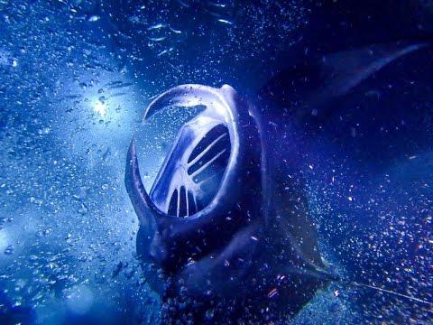 Manta Ray Night Snorkel HUGE in Kailua-Kona, Hawaii