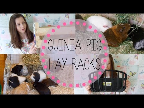Hay Rack Options for Guinea Pigs