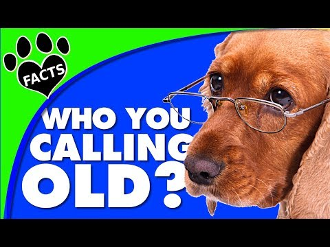 Dog Years: Signs Of Old Age In Senior Dogs - Animal Facts