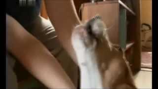 Бигль - порода собак. Фильм о биглях.