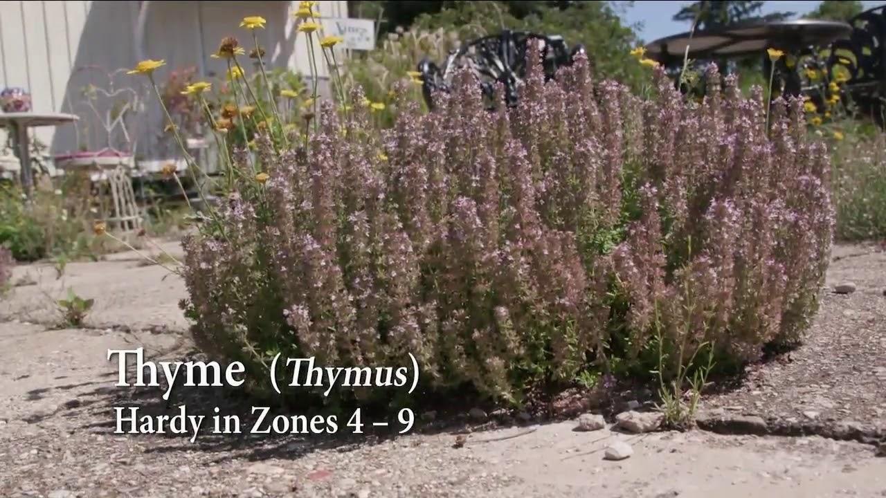 Melindas Garden Moment Patio Solutions - YouTube