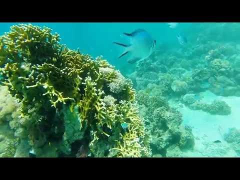 Diving in Saudi Yanbu Dolphine Beach