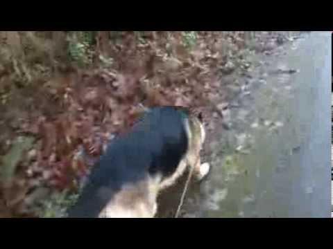 Yukon's daily walk