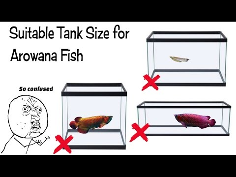 Best Tank Size For Arowana Fish