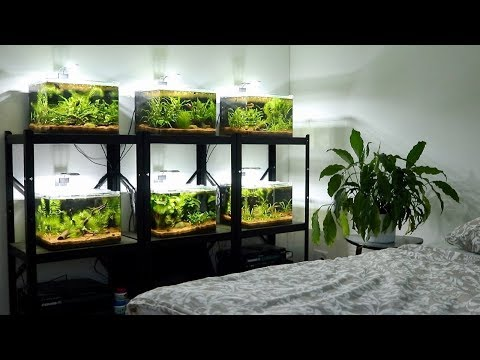 All my Betta Fish! | Planted Betta Fish Tank Setups