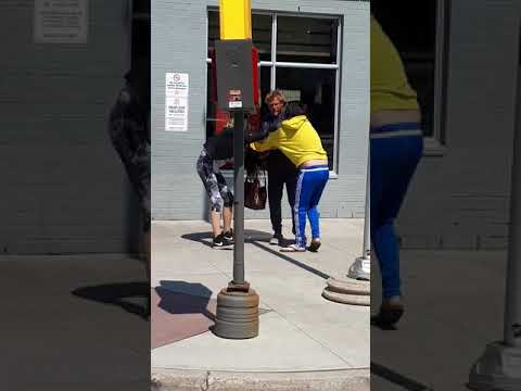Another cat fight in barrie mcdonalds