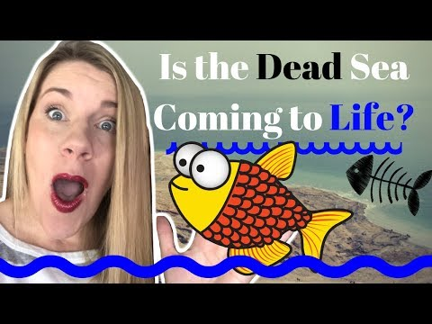 Prophecy Update: Breaking NEWS From Israel: Fish In The Dead SEA!