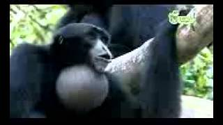 Funny Animals- Funny Videos-Best Funny Compilation On Youtube