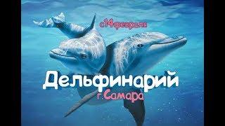 Дельфинарий в Самаре с 14 февраля 2019 (тк Амбар)