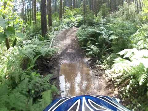 Tahuya State Forest