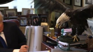 Raw: Bald Eagle Attacks Trump During Photoshoot