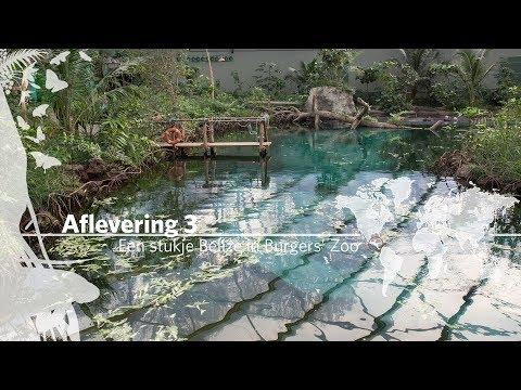 Project Mangrove: Een stukje Belize in Burgers' Zoo Aflevering 3