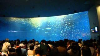 35000匹のイワシが群れる水槽にアジ、カツオ、シュモクザメを数匹...