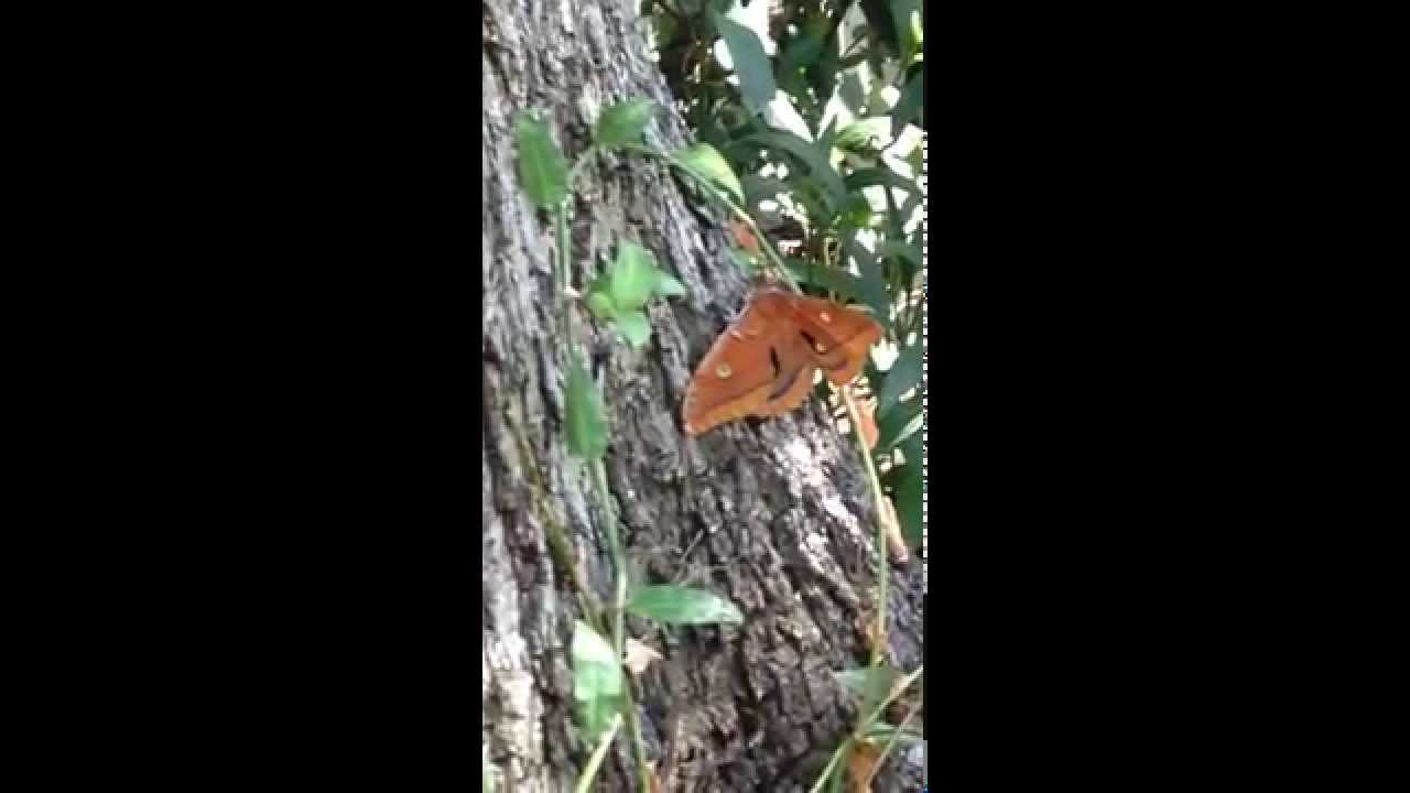 Beautiful Butterfly Video 90