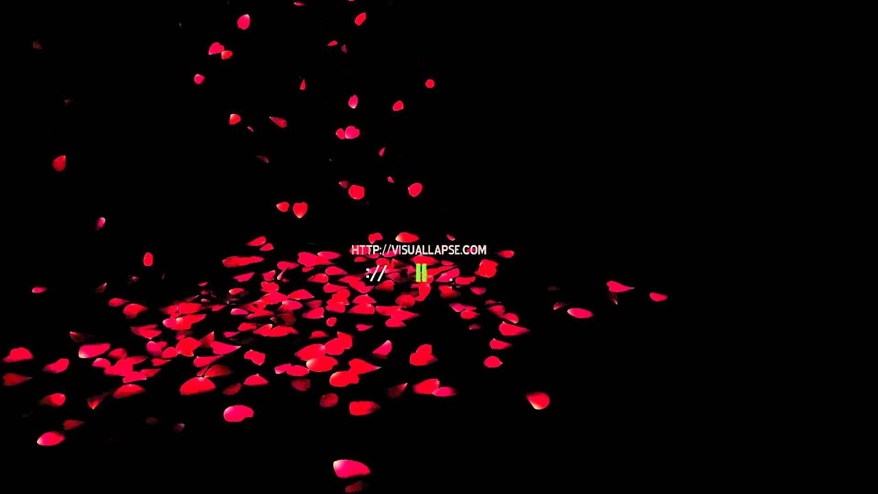 Falling Leaves Wallpaper Animated Hd Rose Petals Falling Royalty Free Stock Video Clip Youtube