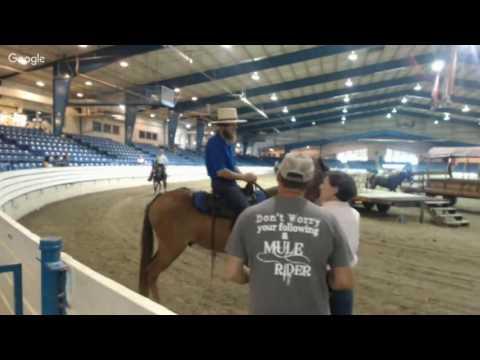 July 2016 Reese Mule Sale Shelbyville TN