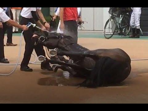 【感動】レース後にぶっ倒れたお馬さんにずっと寄り添う木幡初也騎手の馬愛に感動!藤田菜七子騎手は隣でインタビュー受けてました