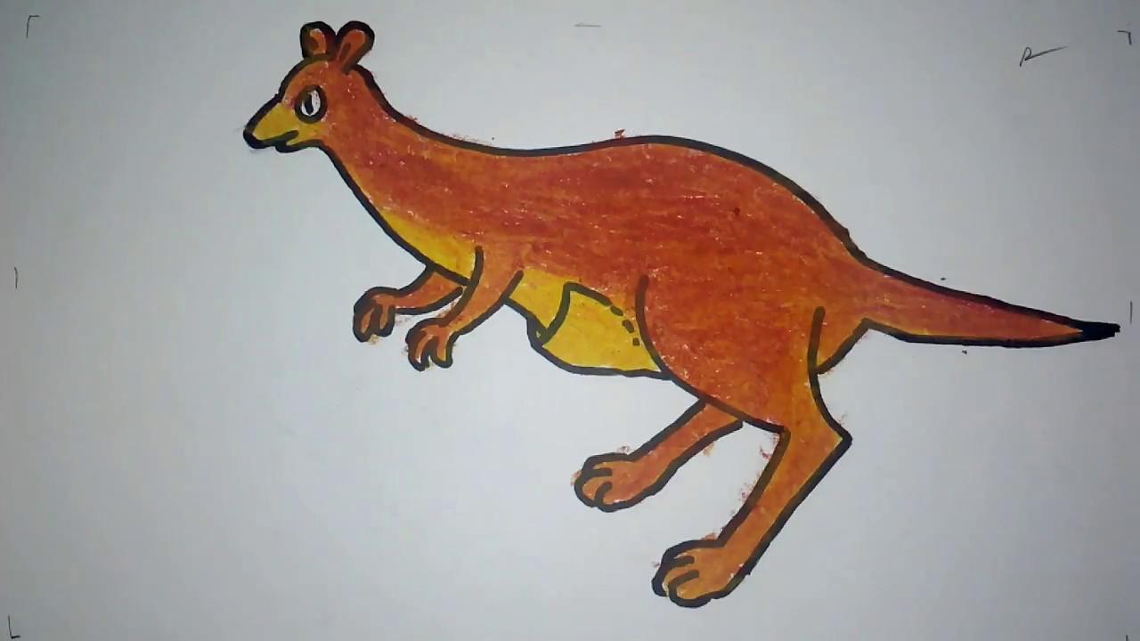 Cara Menggambar Kangguru Untuk Anak