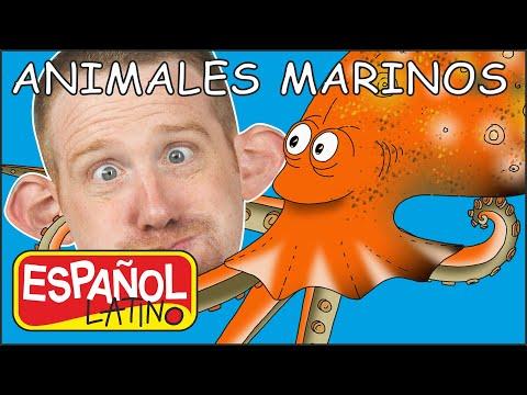 animales-marinos-para-niños-|-historias-de-steve-and-maggie-español-latino-|-aprende-español-latino