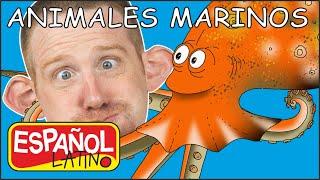 Animales Marinos para Niños | Historias de Steve and Maggie Español Latino | Aprende Español Latino