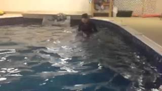 Rehabilitation Swimming For Dogs In Saskatoon