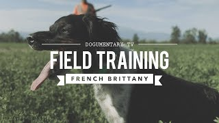 FIELD TRAINING: FRENCH BRITTANY