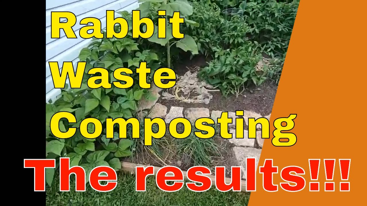 Results of composting rabbit waste in the garden