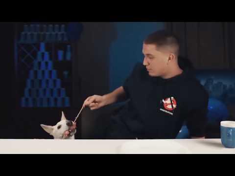 Смешные приколы Приколы с животными Приколы с котами  Смешные коты и собаки