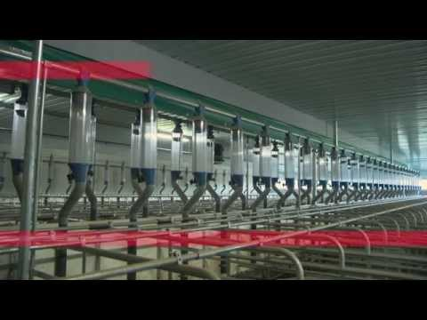 VDL Agrotech - Excellence in Feeding - Pigs