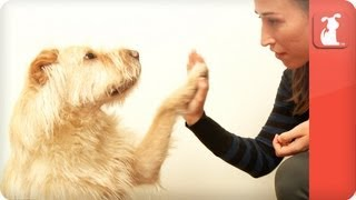Pet Talk - Training Your Pet