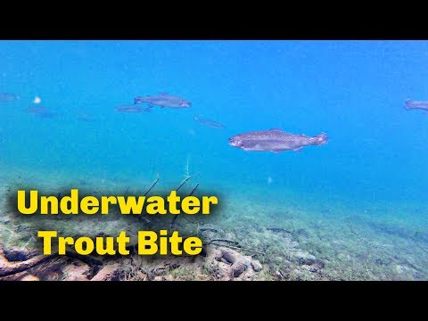 How To Use Trout Bait  | UNDERWATER FOOTAGE