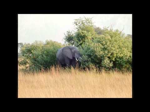 Africa Safari 2015