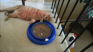 05 Cats Don't Care Funny Pets Videos of 2016 Compilation