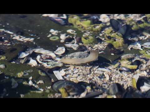 Tidepools, Portland (Princess Margaret) Island Sea Kayak Trip July 2016