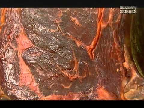 Химия мяса фото