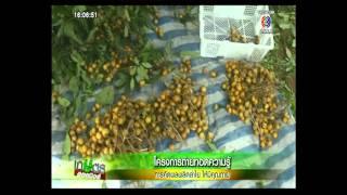 เกษตร Hotnews รายการข่าวย้อนหลัง รายการทีวี รายการทีวีช่อง3 ดูรายการทีวีช่อง3 รายการทีวีย้อนหลัง ดูร